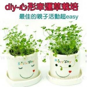 diy植栽